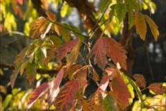 Website Gallery Image ~ Autumn Leaves ~ Thorpe Perrow