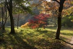 Website Gallery Image ~ Autumn Trees ~ Thorpe Perrow