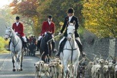 Website Gallery Image ~ Horses and Hounds~ Yorkshire