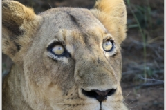 Photographs taken whilst visiting Kruger National Park in South Africa, and visiting Western Australia during March & April 2019.